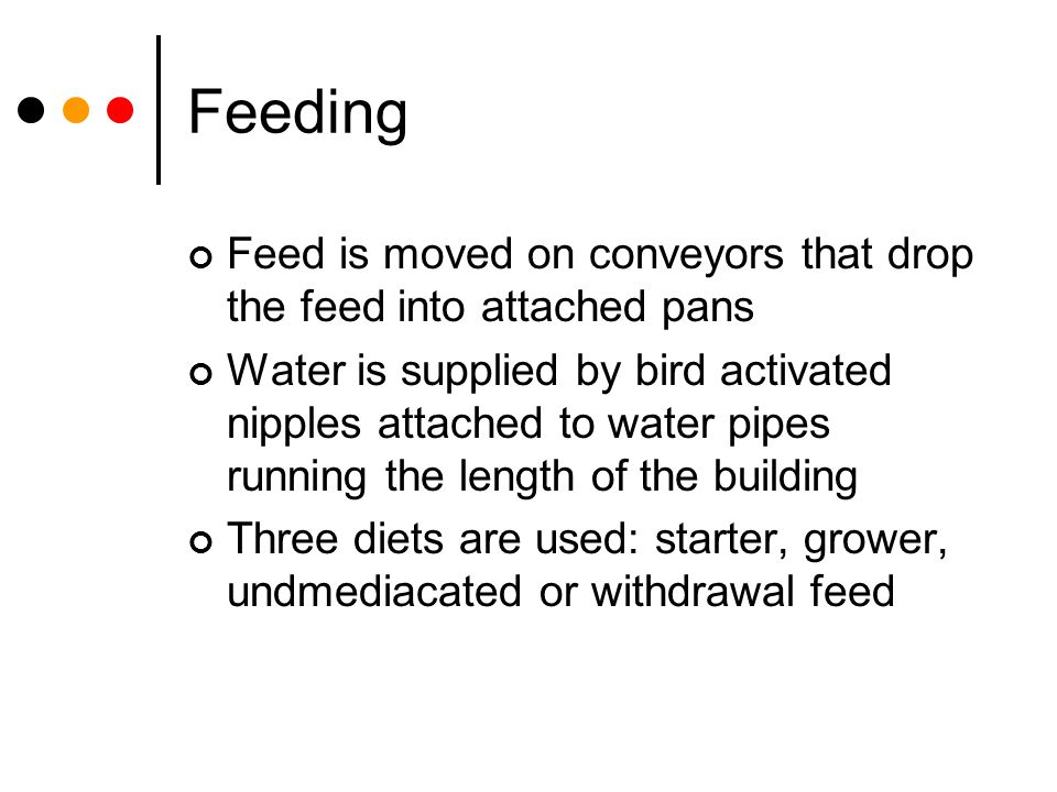 Feeding Feed is moved on conveyors that drop the feed into attached pans Water is supplied by bird activated nipples attached to water pipes running t