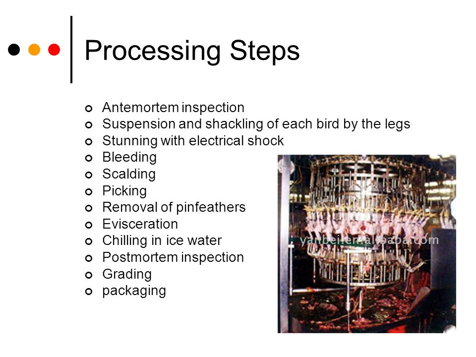 Processing Steps Antemortem inspection Suspension and shackling of each bird by the legs Stunning with electrical shock Bleeding Scalding Picking Remo
