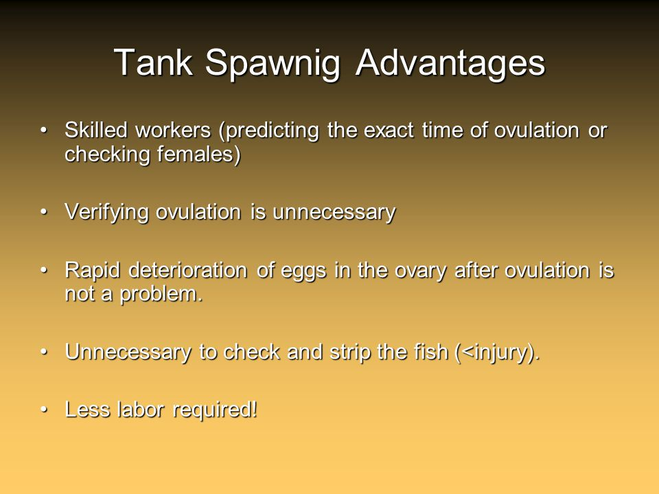Tank Spawnig Advantages Skilled workers (predicting the exact time of ovulation or checking females)Skilled workers (predicting the exact time of ovulation or checking females) Verifying ovulation is unnecessaryVerifying ovulation is unnecessary Rapid deterioration of eggs in the ovary after ovulation is not a problem.Rapid deterioration of eggs in the ovary after ovulation is not a problem.