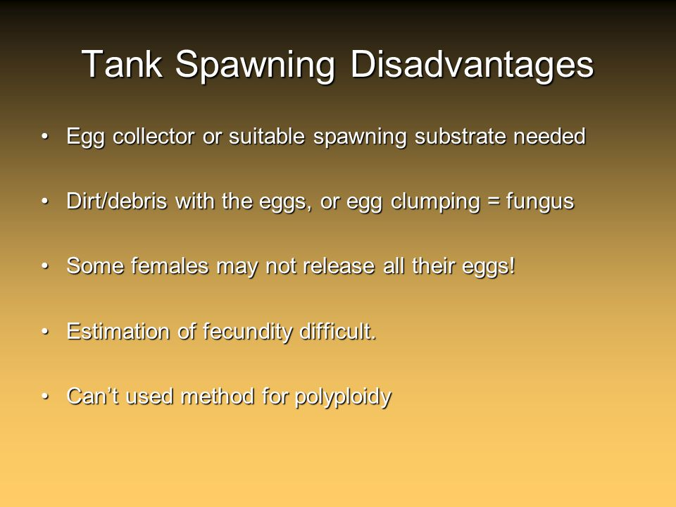 Tank Spawning Disadvantages Egg collector or suitable spawning substrate neededEgg collector or suitable spawning substrate needed Dirt/debris with the eggs, or egg clumping = fungusDirt/debris with the eggs, or egg clumping = fungus Some females may not release all their eggs!Some females may not release all their eggs.