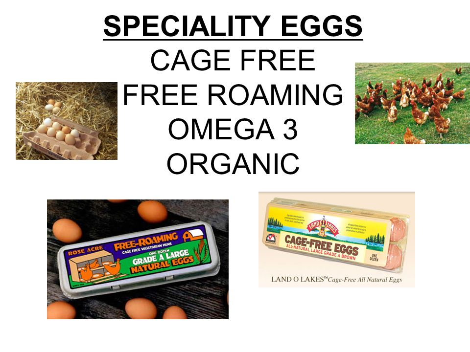 SPECIALITY EGGS CAGE FREE FREE ROAMING OMEGA 3 ORGANIC