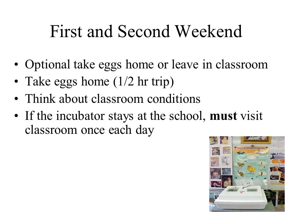 First and Second Weekend Optional take eggs home or leave in classroom Take eggs home (1/2 hr trip) Think about classroom conditions If the incubator