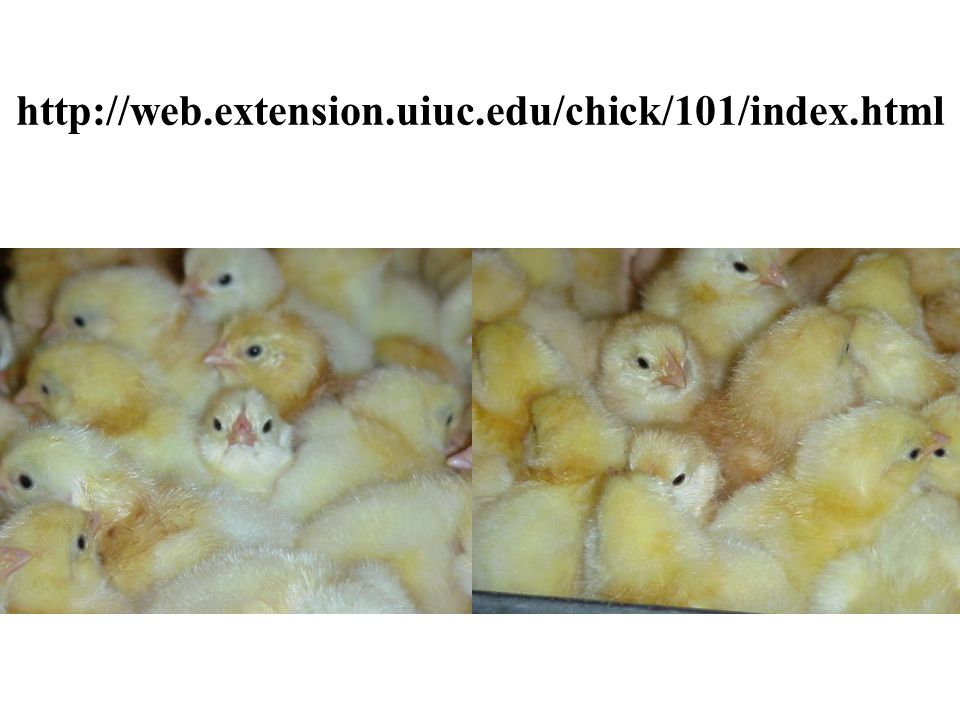 Incubation & Embryology Objectives To train educators about the science and techniques of hatching chicks To increase knowledge and personal confidence and leadership ability through embryology projects To develop youth interest in the science of embryology