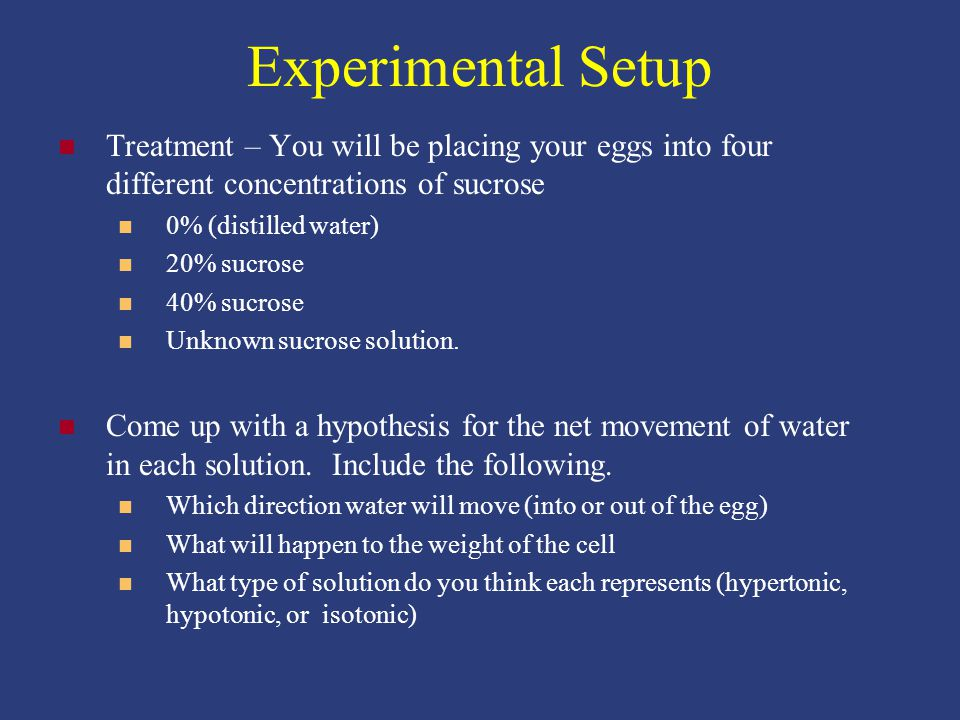 Experimental Setup Treatment – You will be placing your eggs into four different concentrations of sucrose 0% (distilled water) 20% sucrose 40% sucrose Unknown sucrose solution.