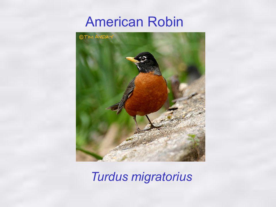 What Makes a Robins Egg Blue