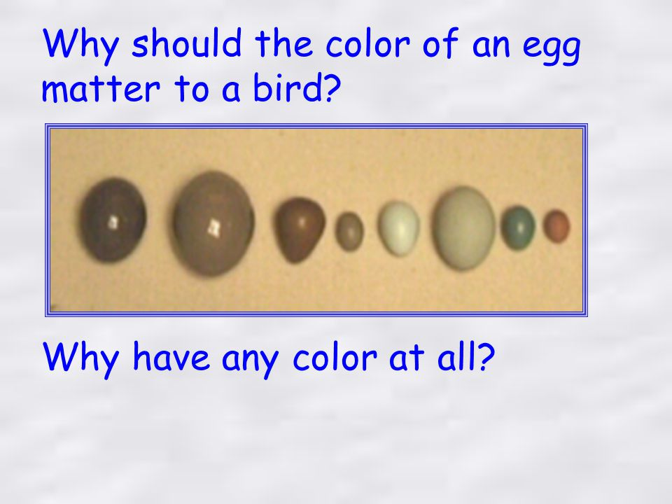 Only three pigments are responsible for the tremendous diversity in egg color and markings 1.Protoporphyrin - produces colors ranging from yellow and pink to reddish buffs or browns.