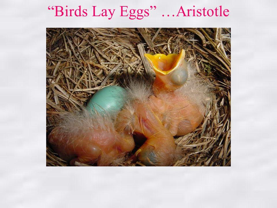 Birds Lay Eggs …Aristotle