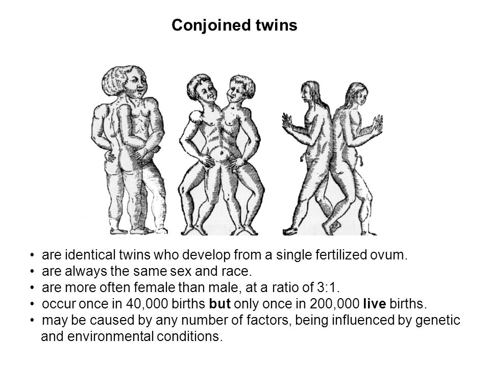 are identical twins who develop from a single fertilized ovum. are always the same sex and race. are more often female than male, at a ratio of 3:1. o