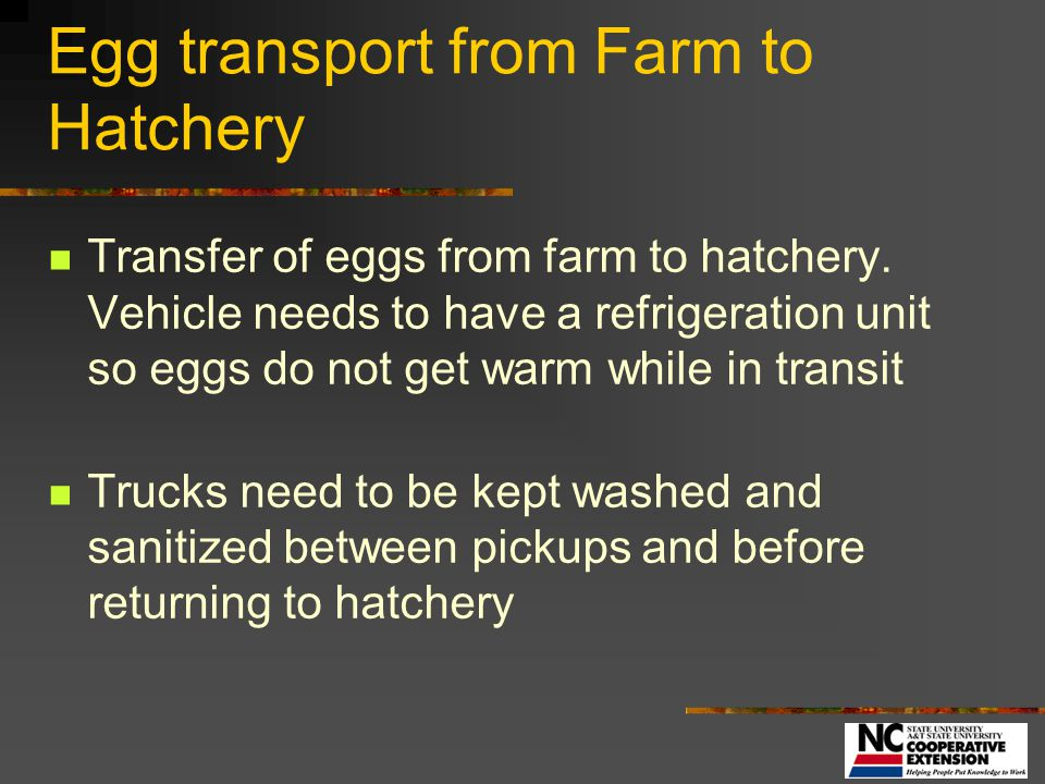 Hatchery Environment Building layout Egg traffic patterns Air Flow All in – all out concept Separation from Flock and uninvited visitors