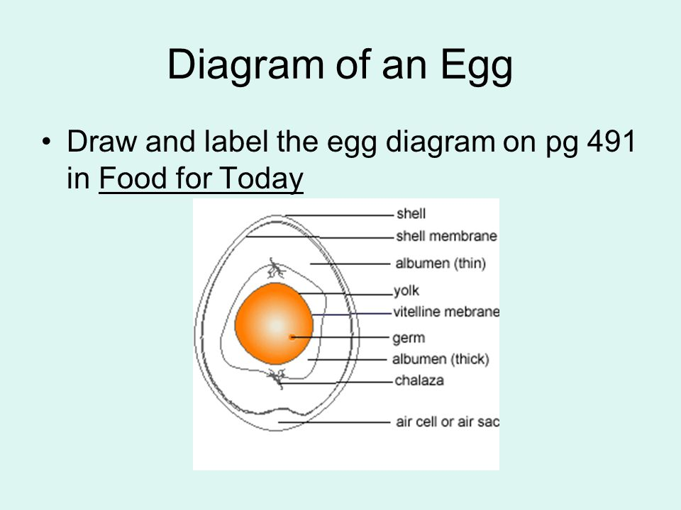 Diagram of an Egg Draw and label the egg diagram on pg 491 in Food for Today
