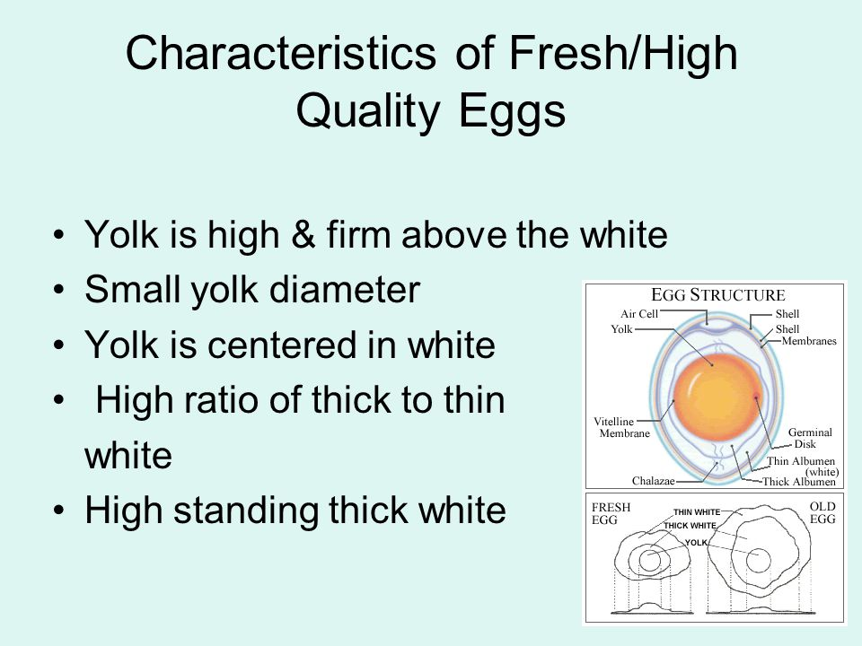 Characteristics of Fresh/High Quality Eggs Yolk is high & firm above the white Small yolk diameter Yolk is centered in white High ratio of thick to th