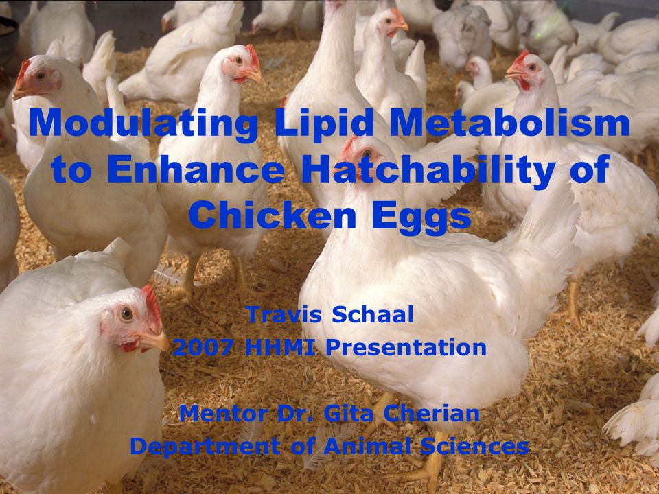 Modulating Lipid Metabolism to Enhance Hatchability of Chicken Eggs Travis Schaal 2007 HHMI Presentation Mentor Dr.