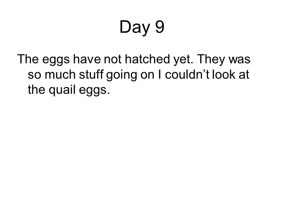 Day 9 The eggs have not hatched yet. They was so much stuff going on I couldnt look at the quail eggs.