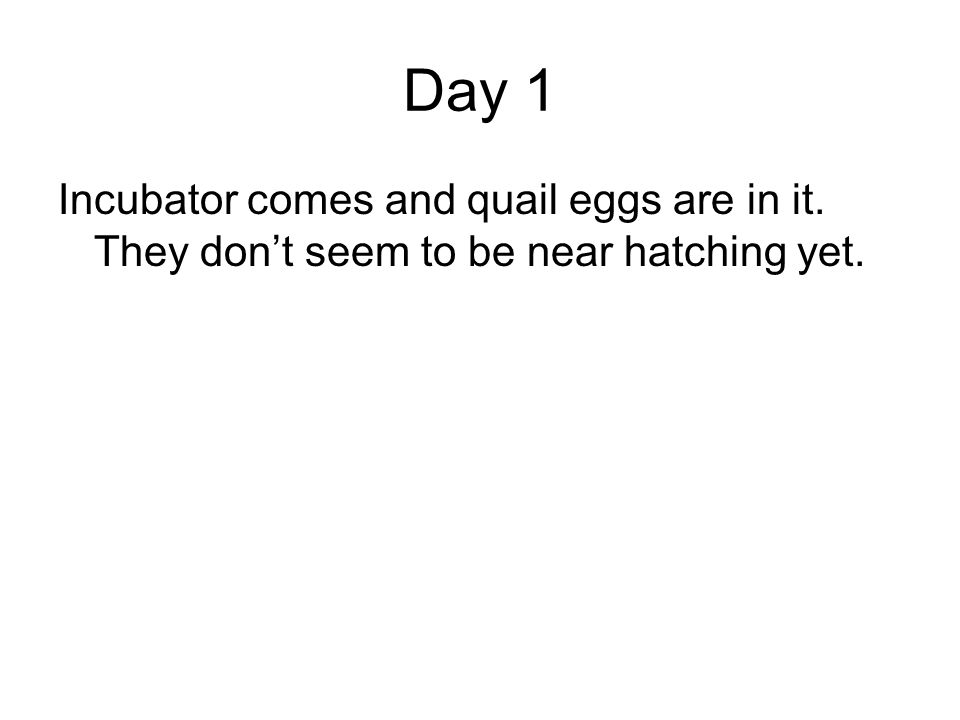 Day 1 Incubator comes and quail eggs are in it. They dont seem to be near hatching yet.