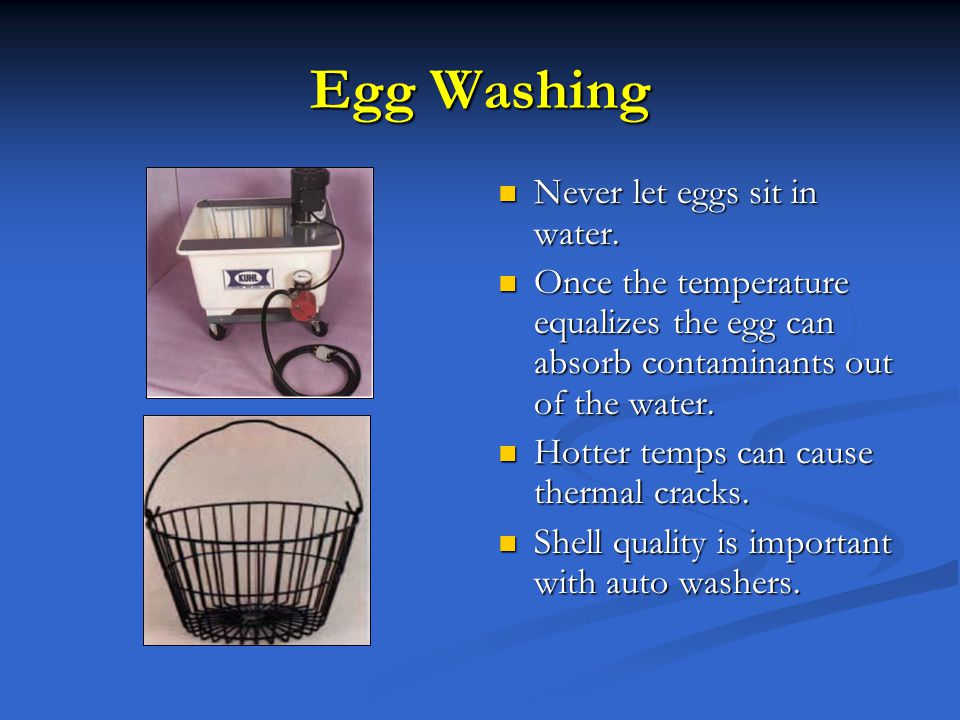Egg Washing Never let eggs sit in water. Once the temperature equalizes the egg can absorb contaminants out of the water. Hotter temps can cause therm