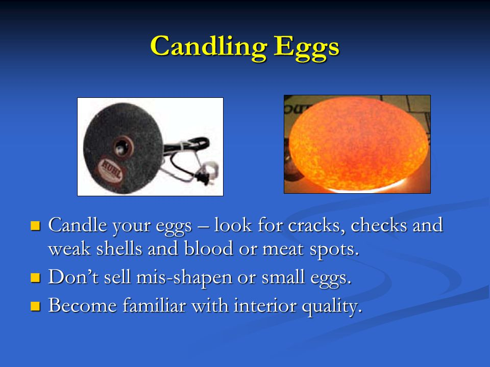 Candling Eggs Candle your eggs – look for cracks, checks and weak shells and blood or meat spots. Dont sell mis-shapen or small eggs. Become familiar