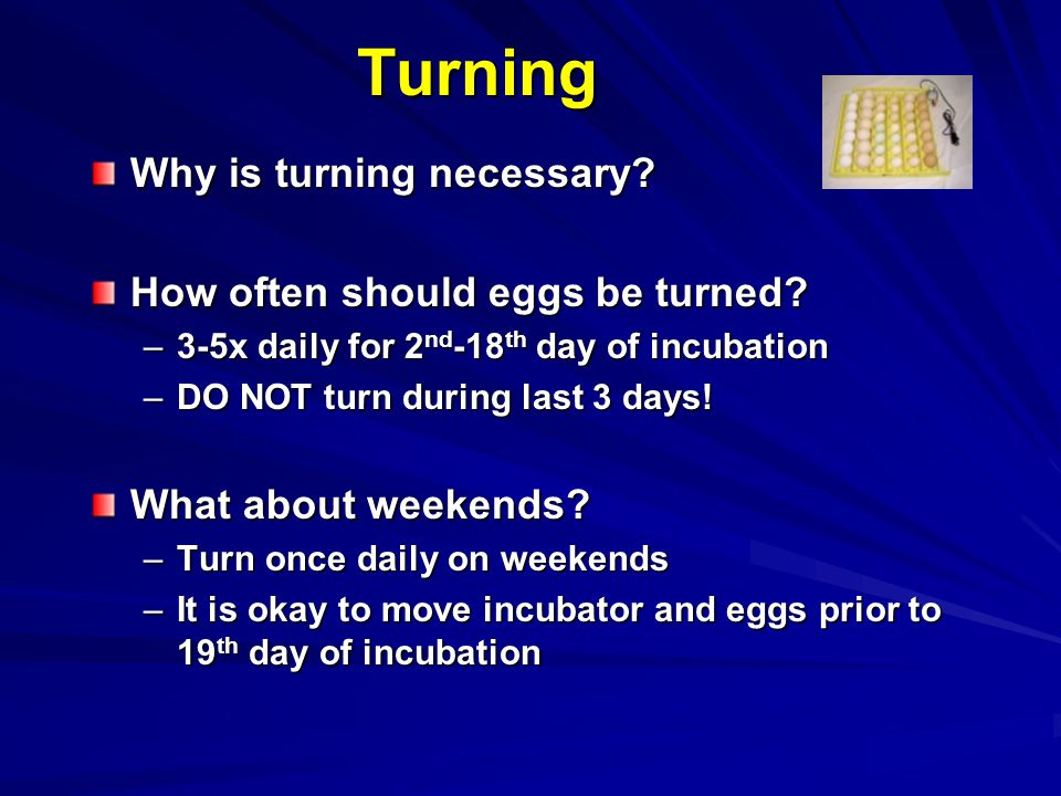 Turning Why is turning necessary? How often should eggs be turned? –3-5x daily for 2 nd -18 th day of incubation –DO NOT turn during last 3 days! What