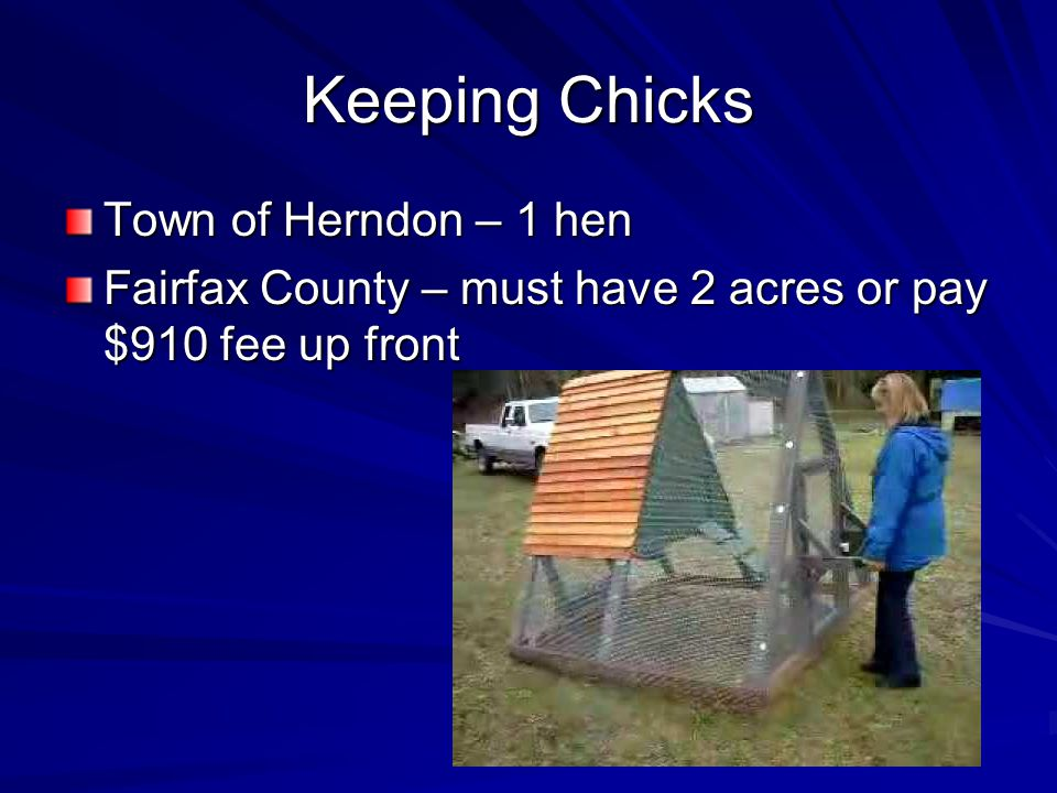 Keeping Chicks Town of Herndon – 1 hen Fairfax County – must have 2 acres or pay $910 fee up front