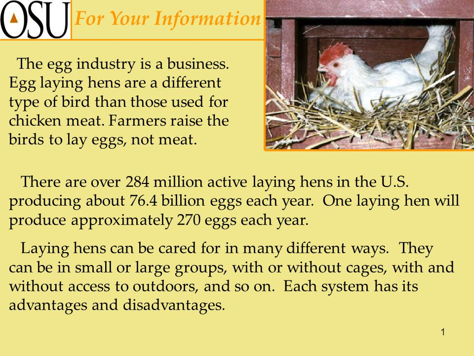 1 For Your Information The egg industry is a business.