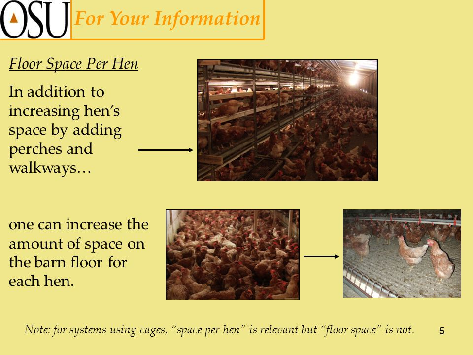 6 For Your Information Beak Trimming Hens sometimes peck at one another, causing injury and sometimes death.