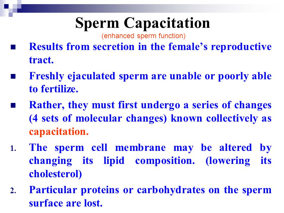 Sperm Capacitation (enhanced sperm function) Results from secretion in the females reproductive tract. Freshly ejaculated sperm are unable or poorly a