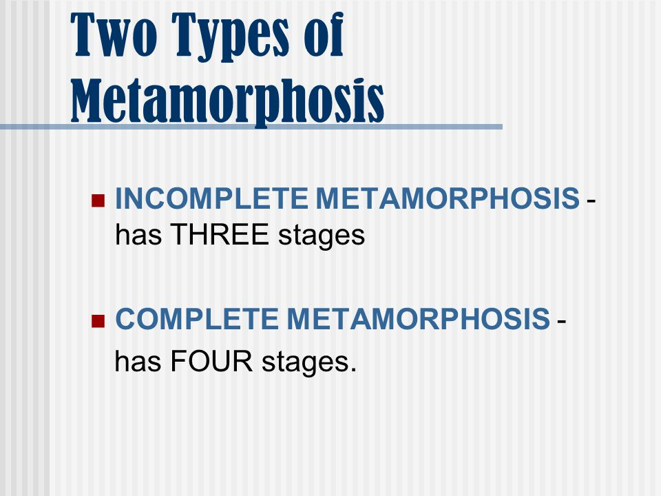 Two Types of Metamorphosis INCOMPLETE METAMORPHOSIS - has THREE stages COMPLETE METAMORPHOSIS - has FOUR stages.