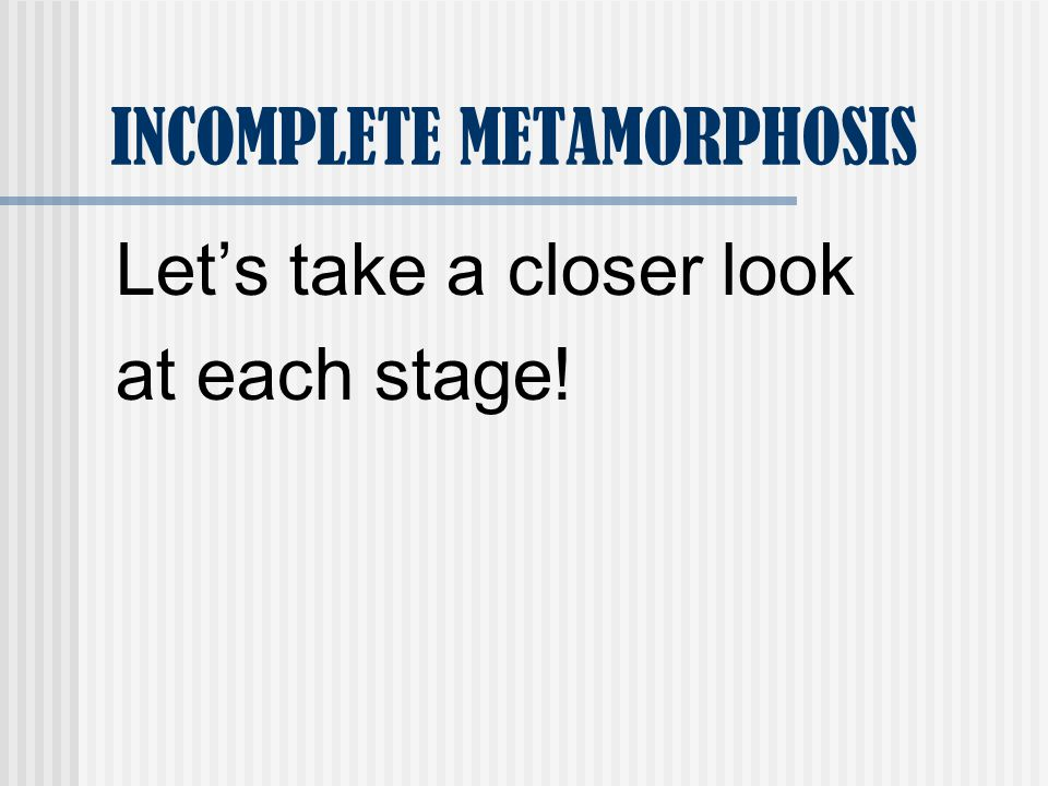 INCOMPLETE METAMORPHOSIS Lets take a closer look at each stage!