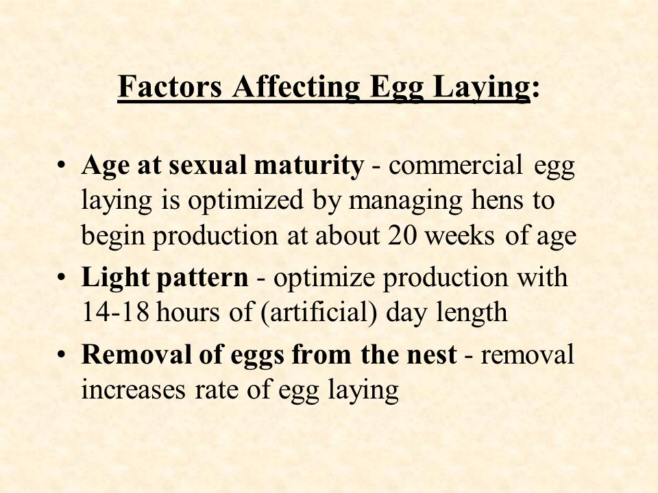 Factors Affecting Egg Laying: Age at sexual maturity - commercial egg laying is optimized by managing hens to begin production at about 20 weeks of ag