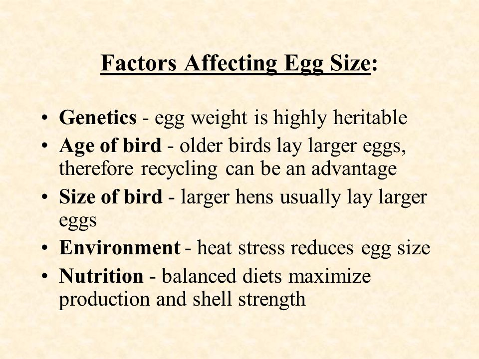 Factors Affecting Egg Size: Genetics - egg weight is highly heritable Age of bird - older birds lay larger eggs, therefore recycling can be an advanta