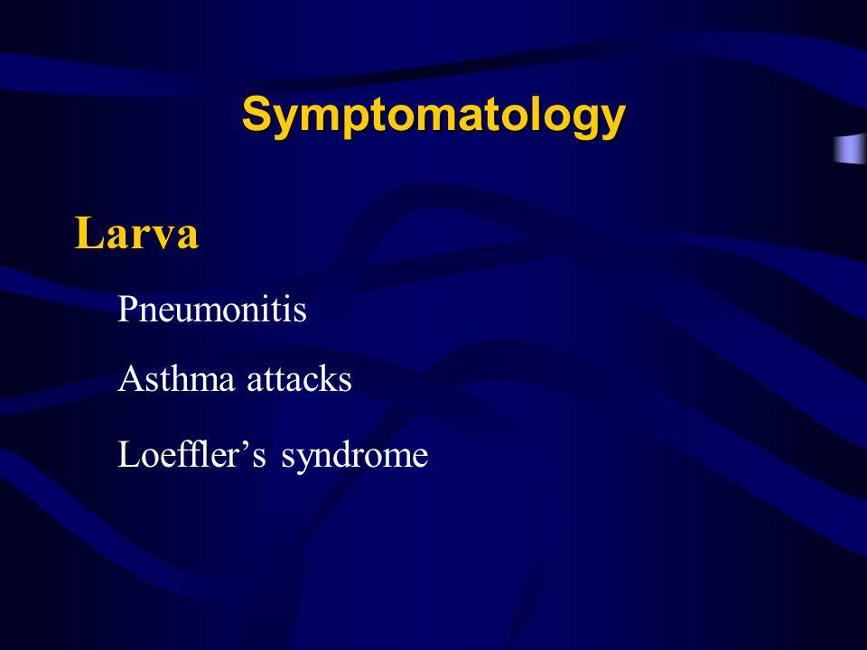Symptomatology Larva Pneumonitis Asthma attacks Loefflers syndrome