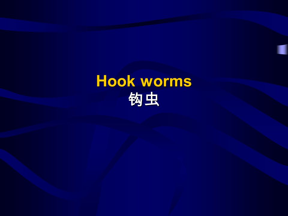 Hook worms Hook worms