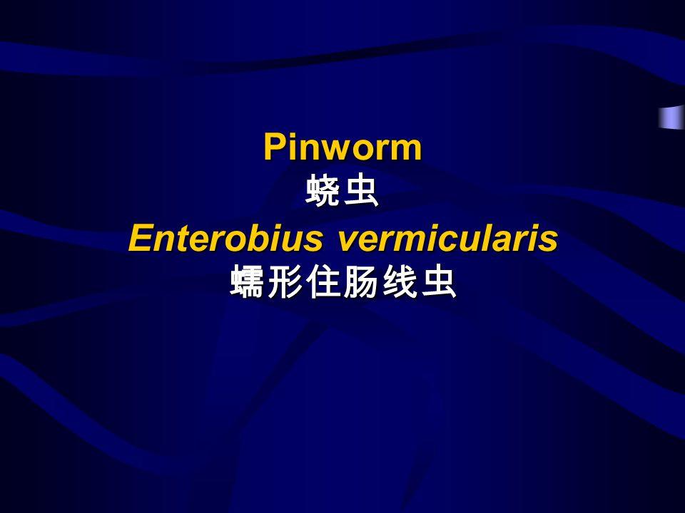 Pinworm Enterobius vermicularis Pinworm Enterobius vermicularis