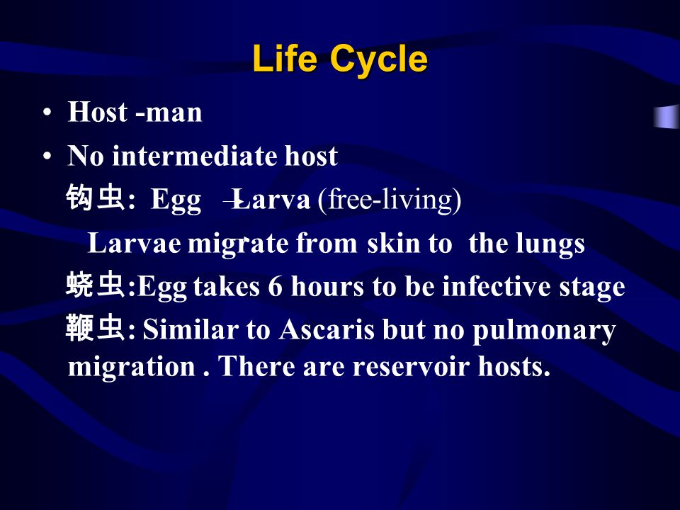 Life Cycle Host -man No intermediate host : Egg Larva (free-living) Larvae migrate from skin to the lungs :Egg takes 6 hours to be infective stage : S