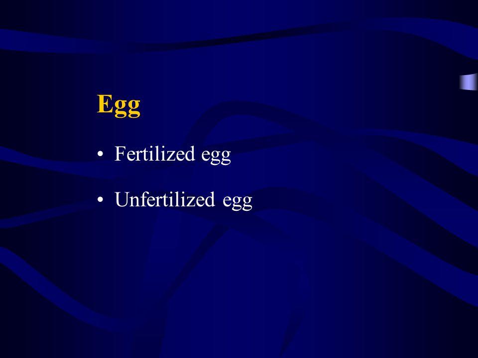 Egg Fertilized egg Unfertilized egg