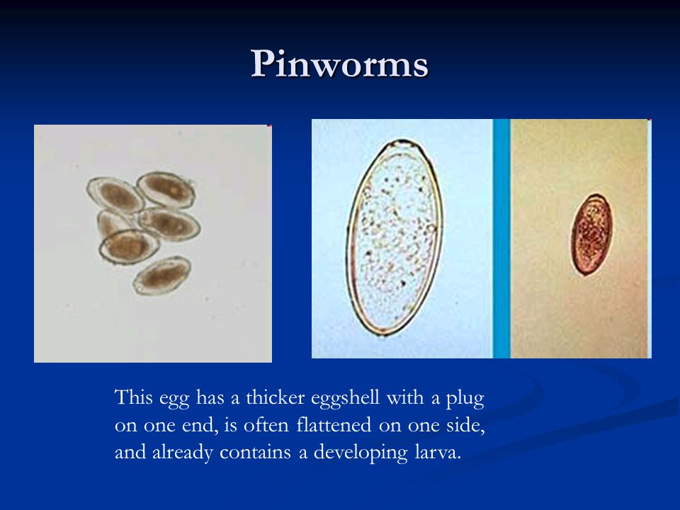 Pinworms This egg has a thicker eggshell with a plug on one end, is often flattened on one side, and already contains a developing larva.