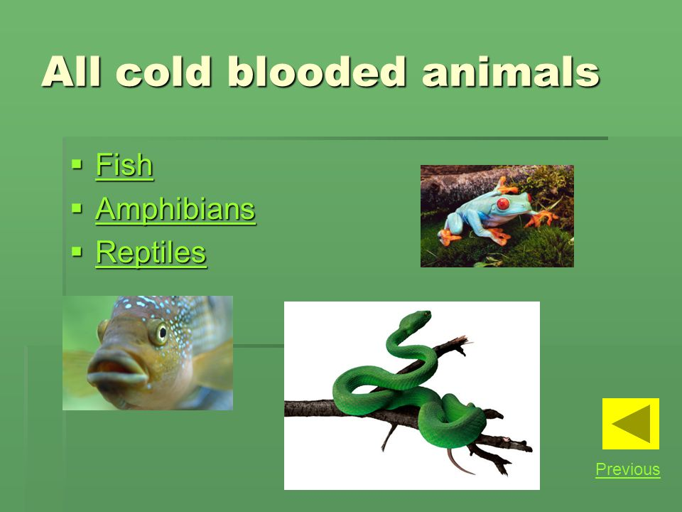 All cold blooded animals Fish Fish Fish Amphibians Amphibians Amphibians Reptiles Reptiles Reptiles Previous
