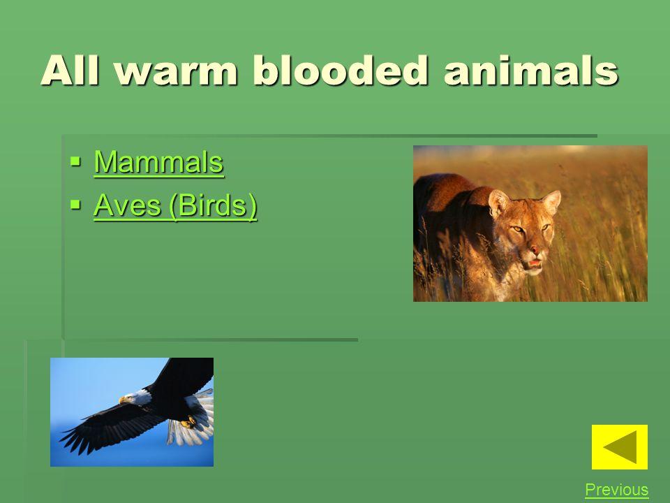 All warm blooded animals Mammals Mammals Mammals Aves (Birds) Aves (Birds) Aves (Birds) Aves (Birds) Previous