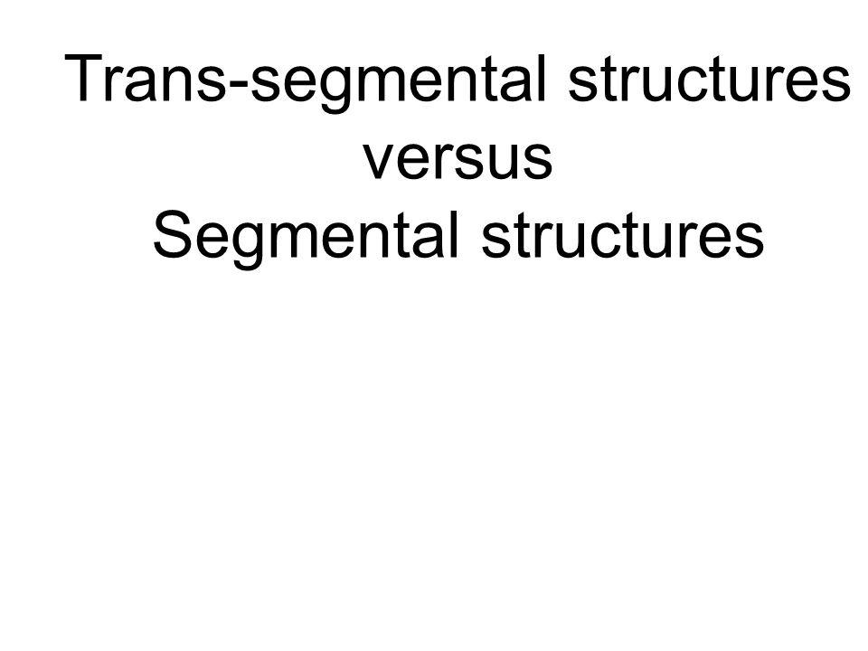 Trans-segmental structures versus Segmental structures