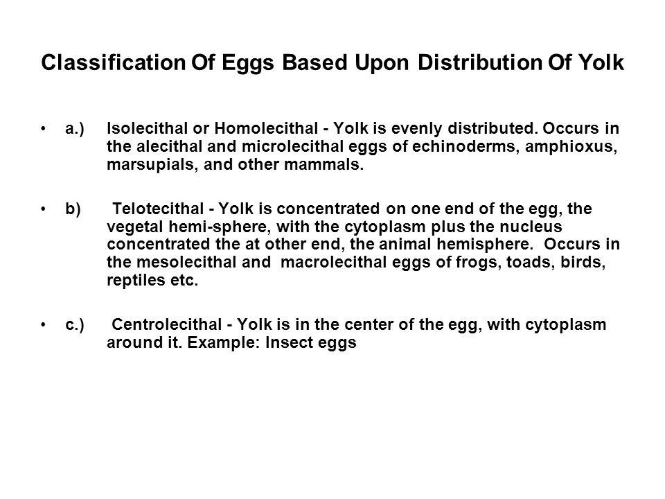 Endolecithal and Ectolecithal Eggs