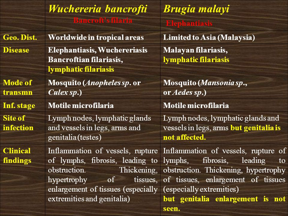 Wuchereria bancrofti Bancroft's filaria Brugia malayi Elephantiasis Geo. Dist.Worldwide in tropical areasLimited to Asia (Malaysia) DiseaseElephantias