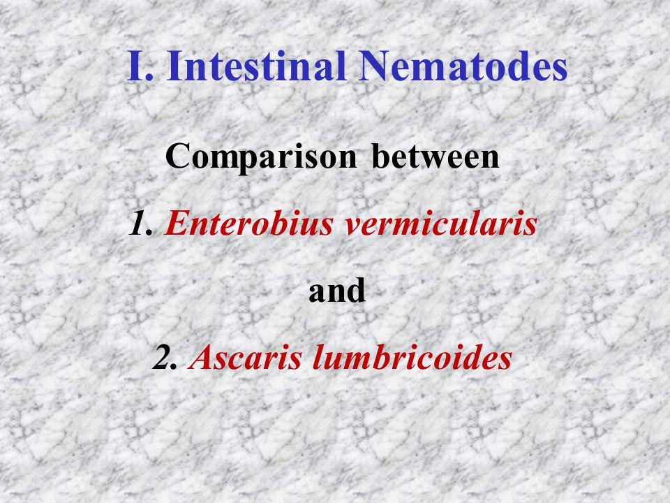 Comparison between 1. Enterobius vermicularis and 2. Ascaris lumbricoides I. Intestinal Nematodes