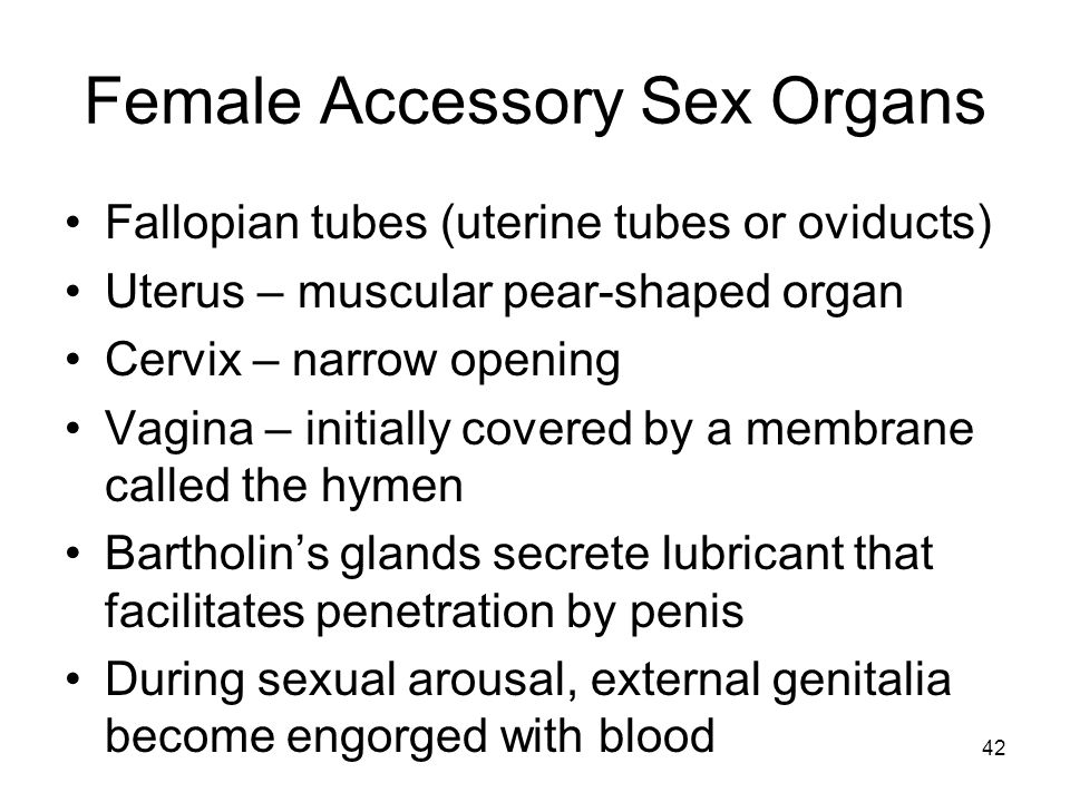 Female Accessory Sex Organs Fallopian tubes (uterine tubes or oviducts) Uterus – muscular pear-shaped organ Cervix – narrow opening Vagina – initially covered by a membrane called the hymen Bartholins glands secrete lubricant that facilitates penetration by penis During sexual arousal, external genitalia become engorged with blood 42