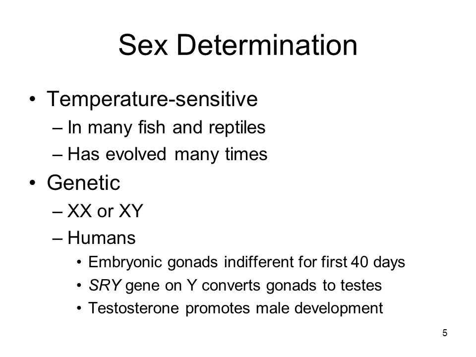 Sex Determination Temperature-sensitive –In many fish and reptiles –Has evolved many times Genetic –XX or XY –Humans Embryonic gonads indifferent for