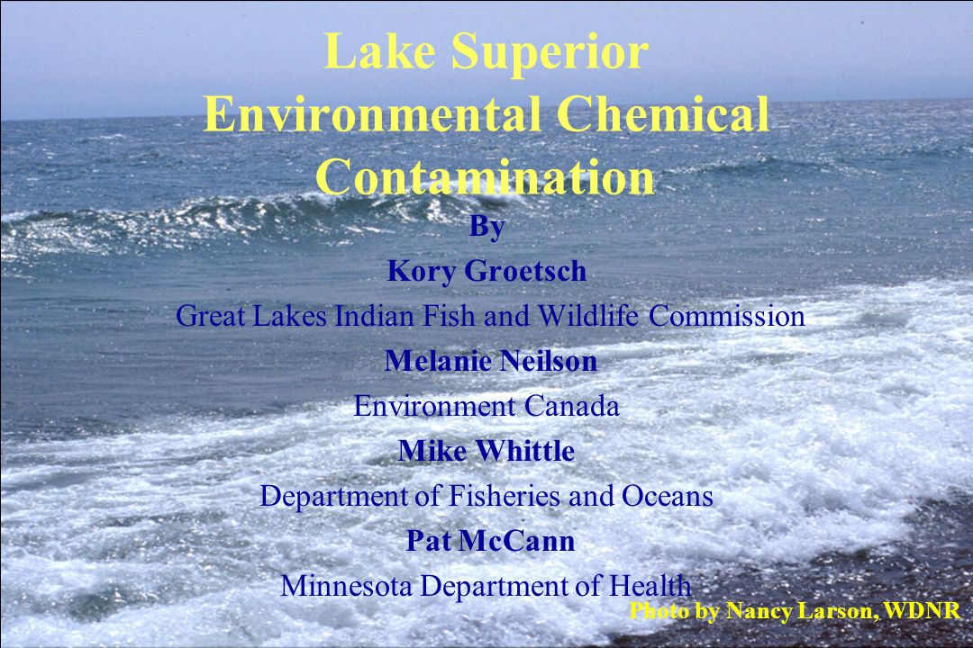 CONCENTRATIONS IN HERRING GULL EGGS AND WHOLE LAKE TROUT