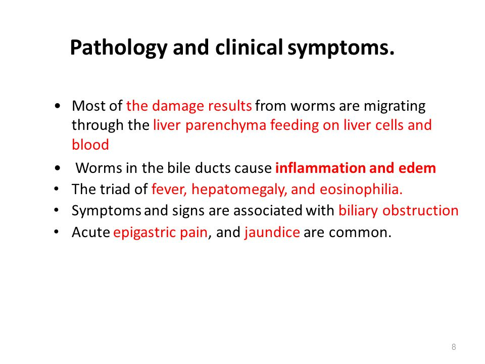 8 Pathology and clinical symptoms. Most of the damage results from worms are migrating through the liver parenchyma feeding on liver cells and blood W