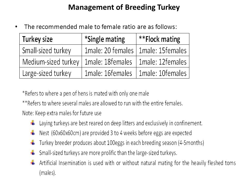Management of Breeding Turkey The recommended male to female ratio are as follows: