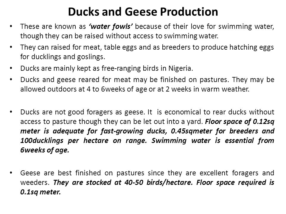 Ducks and Geese Production These are known as water fowls because of their love for swimming water, though they can be raised without access to swimmi