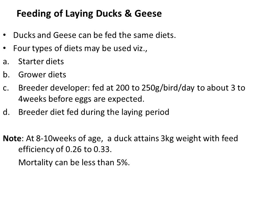 Feeding of Laying Ducks & Geese Ducks and Geese can be fed the same diets. Four types of diets may be used viz., a.Starter diets b.Grower diets c.Bree