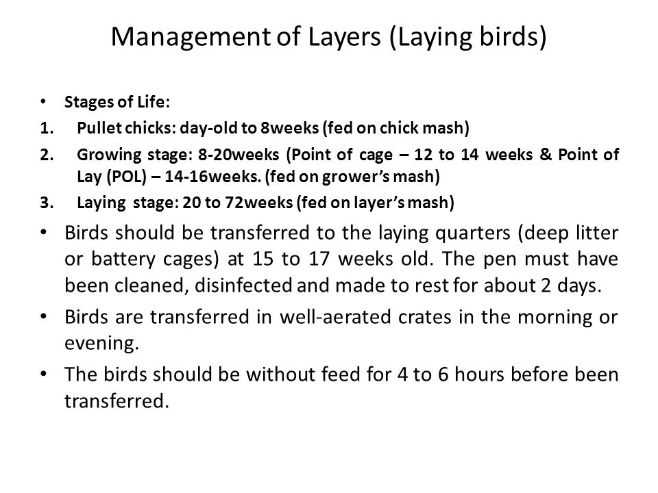 Management of Turkey Reared primarily for meat or as breeders to produce hatching eggs.