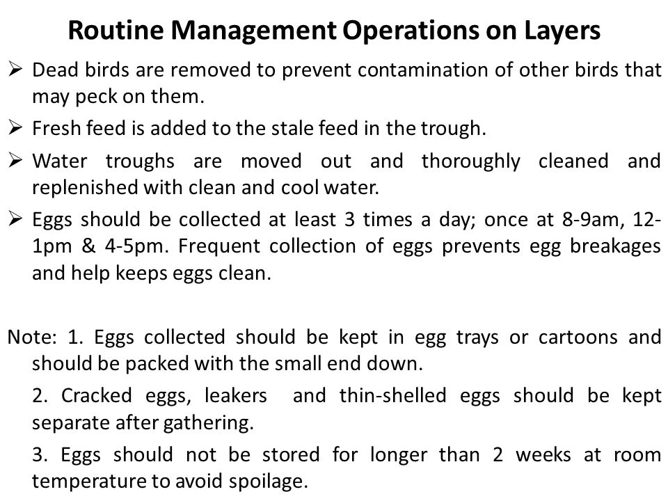 Occasional Management Operation Culling: This refers to the removal of sick, injured, unproductive and poor producing birds from the flock.
